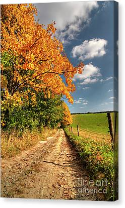 Country Road And Autumn Landscape Canvas Print by Michal Boubin