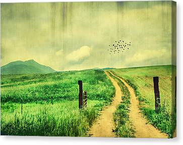 Country Roads Canvas Print by Darren Fisher