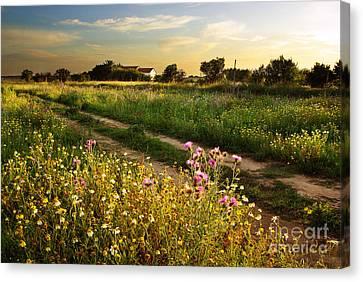 Countryside Landscape Canvas Print by Carlos Caetano