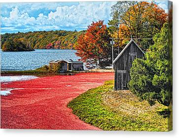 Cranberry Bog Canvas Print by Gina Cormier