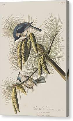 Titmouse Canvas Print - Crested Titmouse by John James Audubon