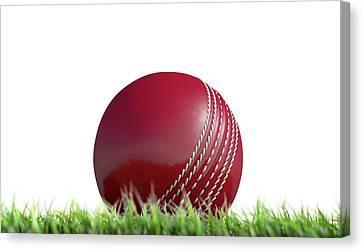 Cricket Ball Resting On Grass Canvas Print