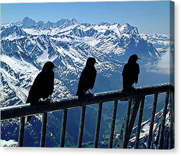 Canvas Print featuring the photograph Crows On Top Of Mount Titlis - Switzerland by Joseph Hendrix
