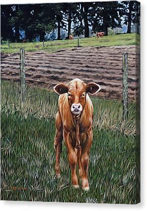 Curious Calf Canvas Print by Rick McKinney