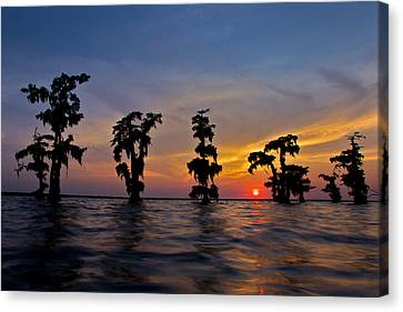 Canvas Print featuring the photograph Cypress Trees by Evgeny Vasenev