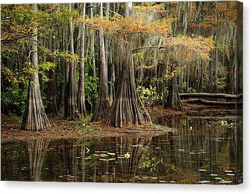 Cypress Trees In Caddo Lake Canvas Print
