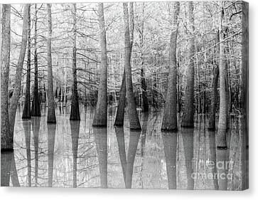 Cypress - Tupelo Swamp North Louisiana Canvas Print by Scott Pellegrin