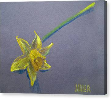 Daffodil Canvas Print by Donald Maier