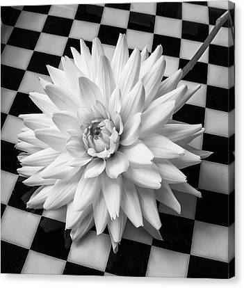 Large White Flower Canvas Print - Dahlia On Checker Background by Garry Gay