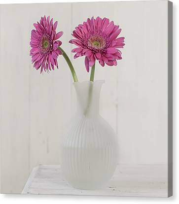 Canvas Print featuring the photograph Gerbera Daisy Love by Kim Hojnacki