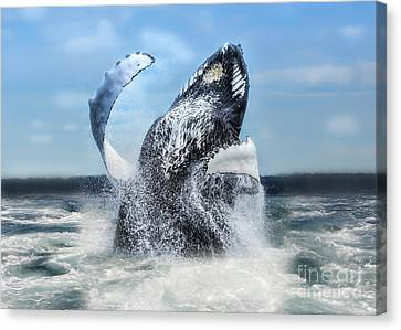 Dances With Whales Canvas Print