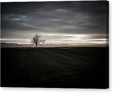 Dark And Light Canvas Print by Miguel Winterpacht
