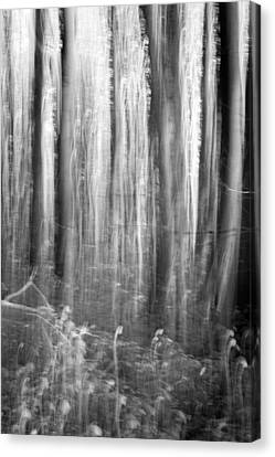 Wavy Canvas Print - Dark Forest Abstractions by Chris Dale