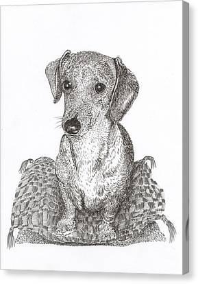 Dashound Pride Canvas Print by Jack Pumphrey