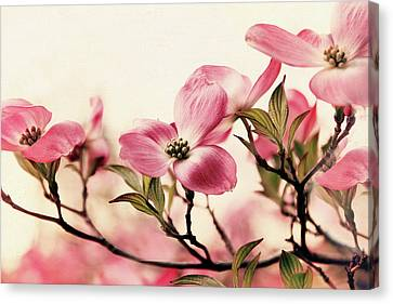 Canvas Print featuring the photograph Delicate Dogwood by Jessica Jenney