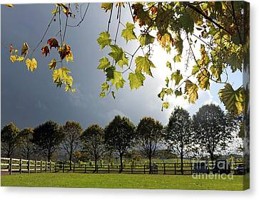 Denbies Vineyard Surrey Uk Canvas Print