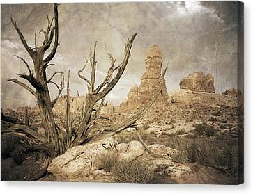 Canvas Print featuring the photograph Desert Tree by Mike Irwin