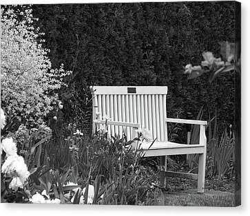 Desolate In The Garden Canvas Print