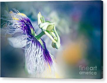 Passiflora Canvas Print - Destination Sunshine by Sharon Mau