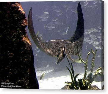 Devilray In Paradise Canvas Print by Robert Meanor
