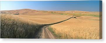 Dirt Road Through Wheat Field, Kamiak Canvas Print by Panoramic Images