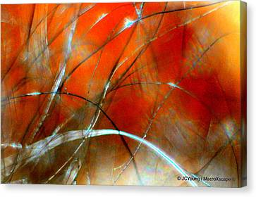Distant Fire Canvas Print by JCYoung MacroXscape