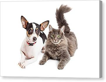 Dog And Cat Laying Together Looking Forward Canvas Print