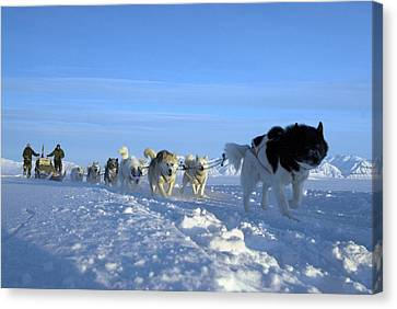 Dogsledge, Northern Greenland Canvas Print by Louise Murray
