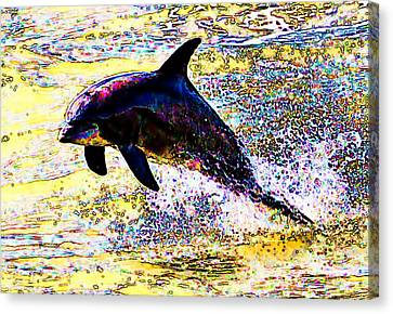 Dolphin Canvas Print by John Collins