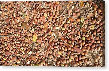 Donguri Means Acorn  Canvas Print