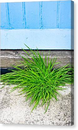 Door Step Canvas Print by Tom Gowanlock