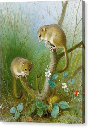 Dormice Canvas Print by Archibald Thorburn