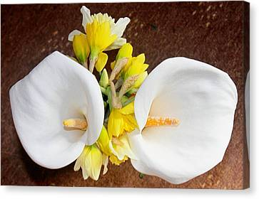 Dafs Canvas Print - Double Delight by Kevin F Cook