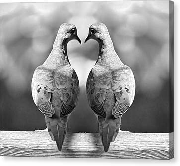 Dove Birds Canvas Print by Randall Nyhof