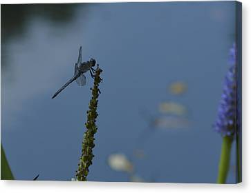 Dragon Fly Canvas Print by Linda Geiger