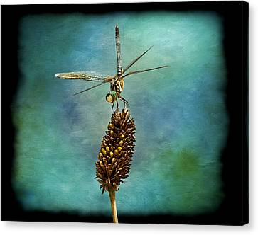 Dragon Fly Canvas Print by Steven Michael