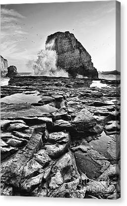 Dramatic View Of Shark Fin Cove Canvas Print