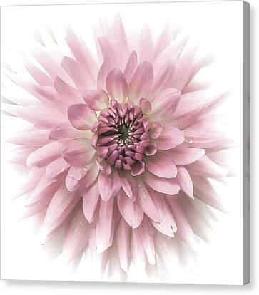 Canvas Print featuring the photograph Dreamy Dahlia by Julie Palencia