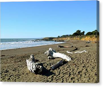Driftwood On Moonstone Beach Canvas Print by Barbara Snyder