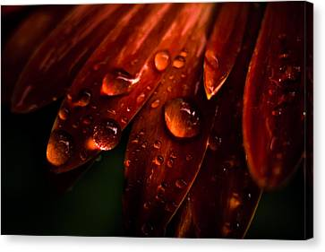 Drops Canvas Print by Peter Scott