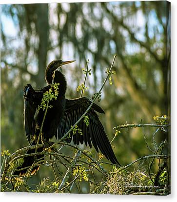 Drying Time Canvas Print by Marvin Spates