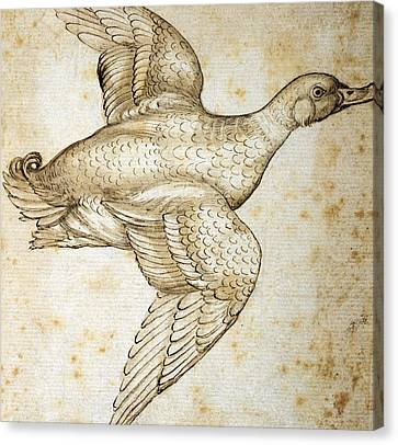 Duck Canvas Print by Leonardo da Vinci