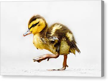 Duckling Parade Canvas Print