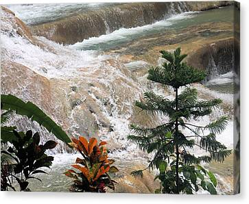 Dunns River Falls Canvas Print by Rosalie Scanlon