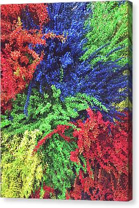 Dyed Plants Background Canvas Print by Tom Gowanlock