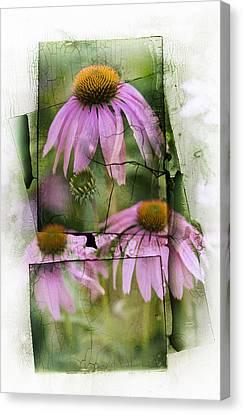 Echinacea Canvas Print by Jeff Klingler