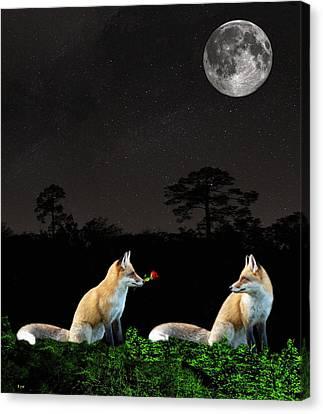 Eftalou Foxes Canvas Print
