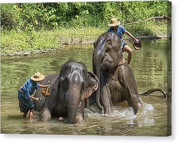 Canvas Print featuring the photograph Elephant Bath by Wade Aiken