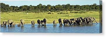 Elephant Canvas Print - Elephant Herd by Tony Murtagh