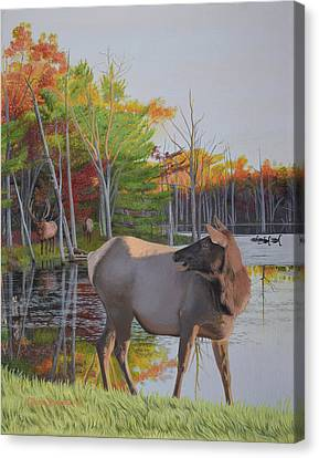 Elk Country Evening Canvas Print